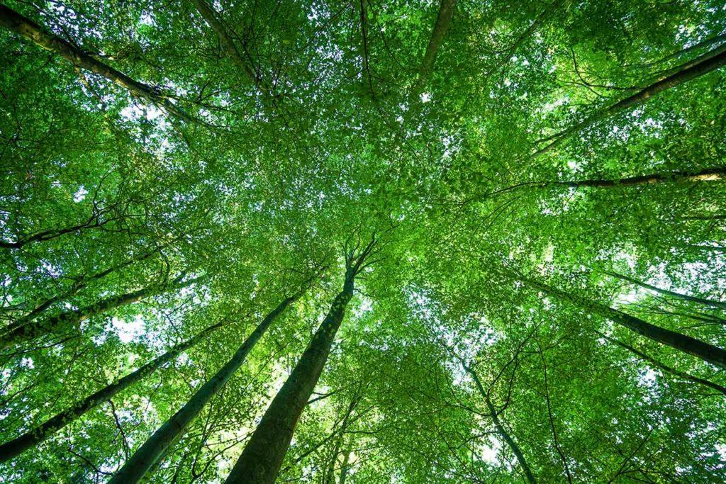 Bild mit Bäumen und viel grün. Ansicht von unten nach oben